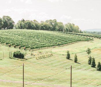 gorgeous vineyard landscape